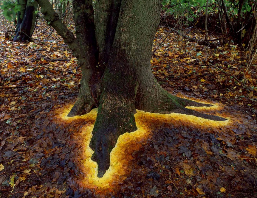 Sycamore leaves edge the roots of a sycamore tree. Andy Goldsworthy.