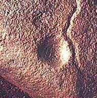 Cupule detail at Auditorium Cave at Bhimbetka, Madhya Pradesh, India  Dates from 290,000 - 700,000 BCE